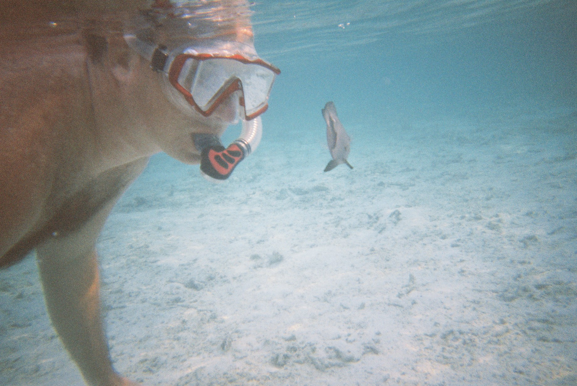 Maldives snorkelling - Up Close and Personal