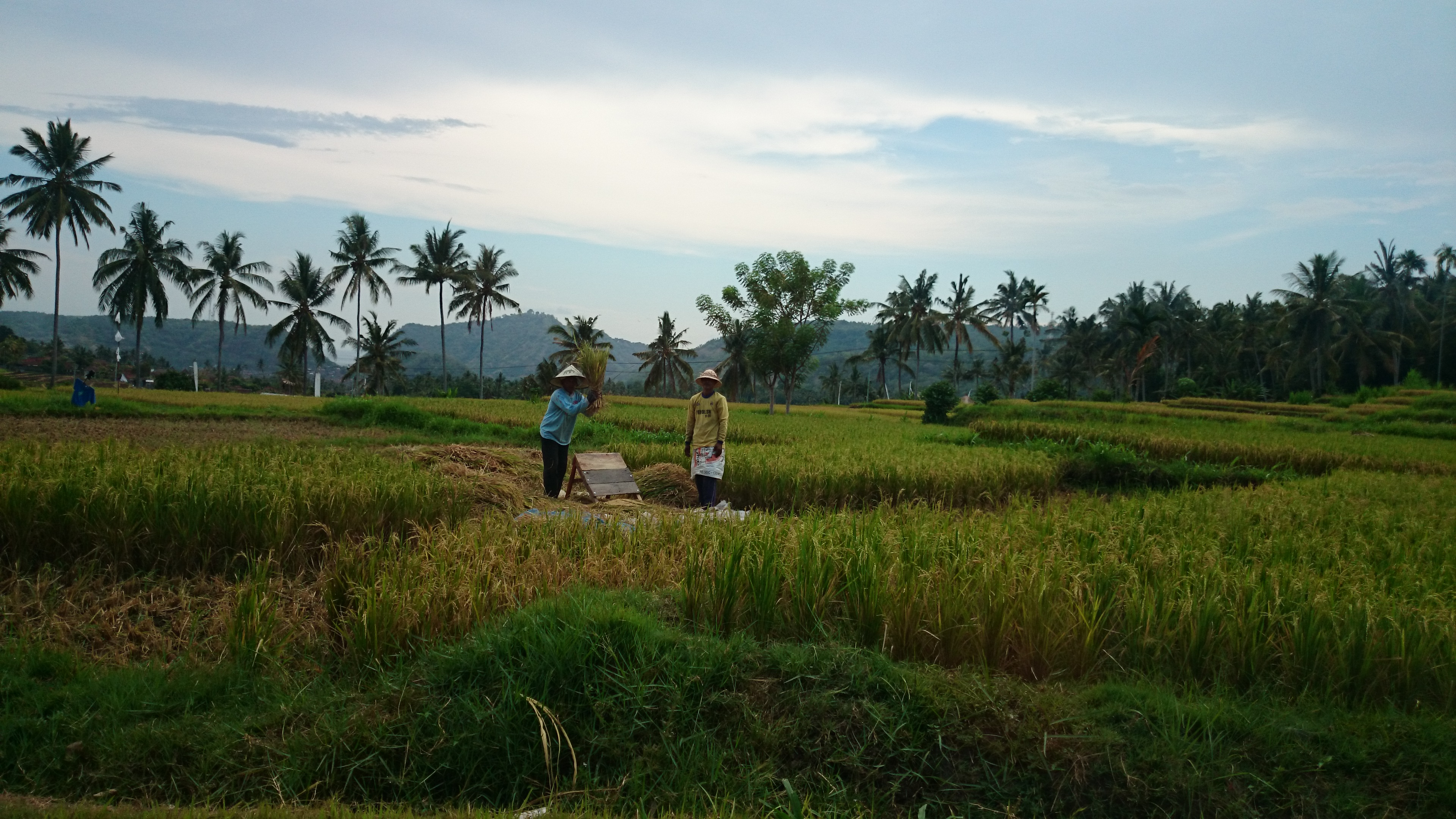 workers-in-the-rice-fields