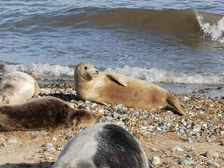 Seductive Seal